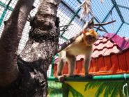 Мини-зоопарк