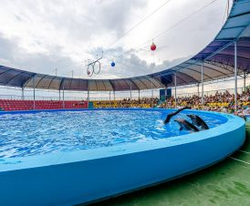 Представление в дельфинарии