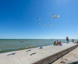 Чайки на пляже в Геническе